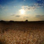 Rolnicy z dobrymi zbiorami i… coraz wyższym zadłużeniem