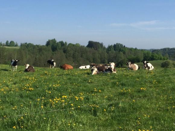 Laktopol rozwija skup mleka BIZNES, Firma - W przeciągu ostatnich dwóch lat Laktopol powiększył ilość skupionego mleka o ponad 160%. Firma oferuje producentom tę usługę od połowy 2016 r. i sukcesywnie rozwija sieć współpracujących z nią rolników.